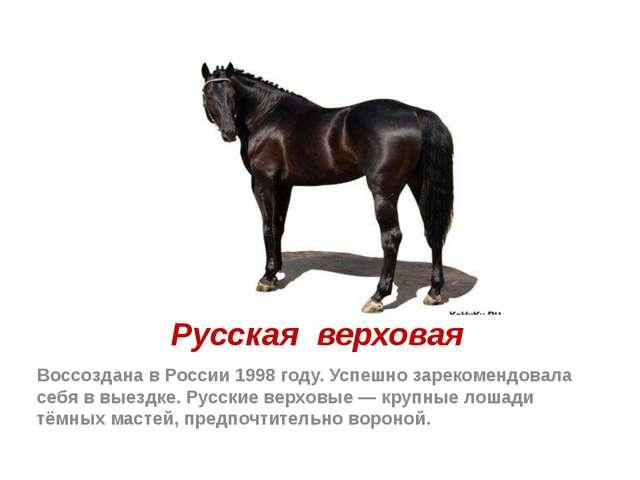 Русская верховая Воссоздана в России 1998 году. Успешно зарекомендовала себя...