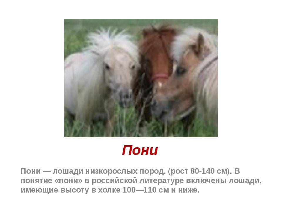 Пони Пони — лошади низкорослых пород. (рост 80-140 см). В понятие «пони» в ро...