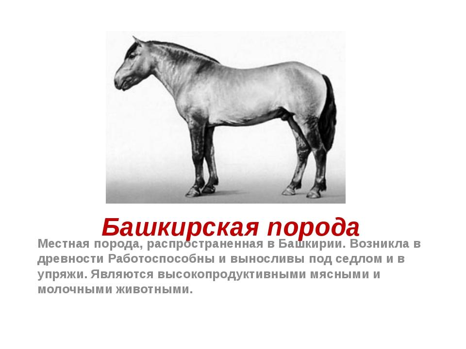 Башкирская порода Местная порода, распространенная в Башкирии. Возникла в дре...