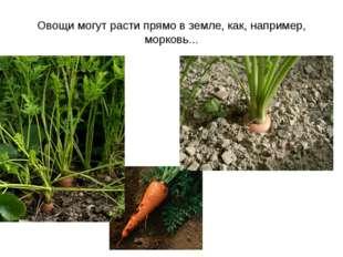 Овощи могут расти прямо в земле, как, например, морковь...