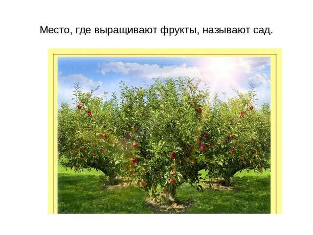 Место, где выращивают фрукты, называют сад.