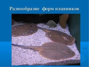 Разнообразие форм плавников