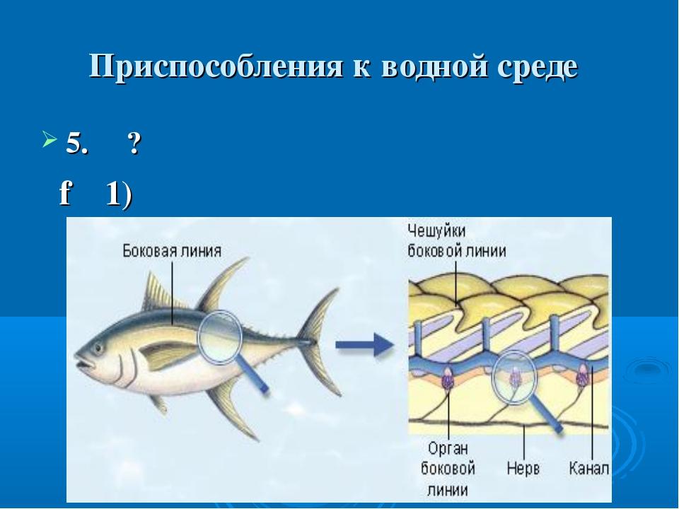 Приспособления к водной среде 5. ? f 1)