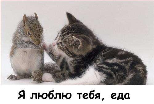 http://img685.imageshack.us/img685/5282/lolcats2ko1357695550912.jpg