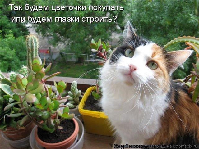 http://s52.radikal.ru/i137/0904/2b/47c39ddef141.jpg