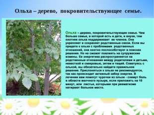 Ольха – дерево, покровительствующее семье.
