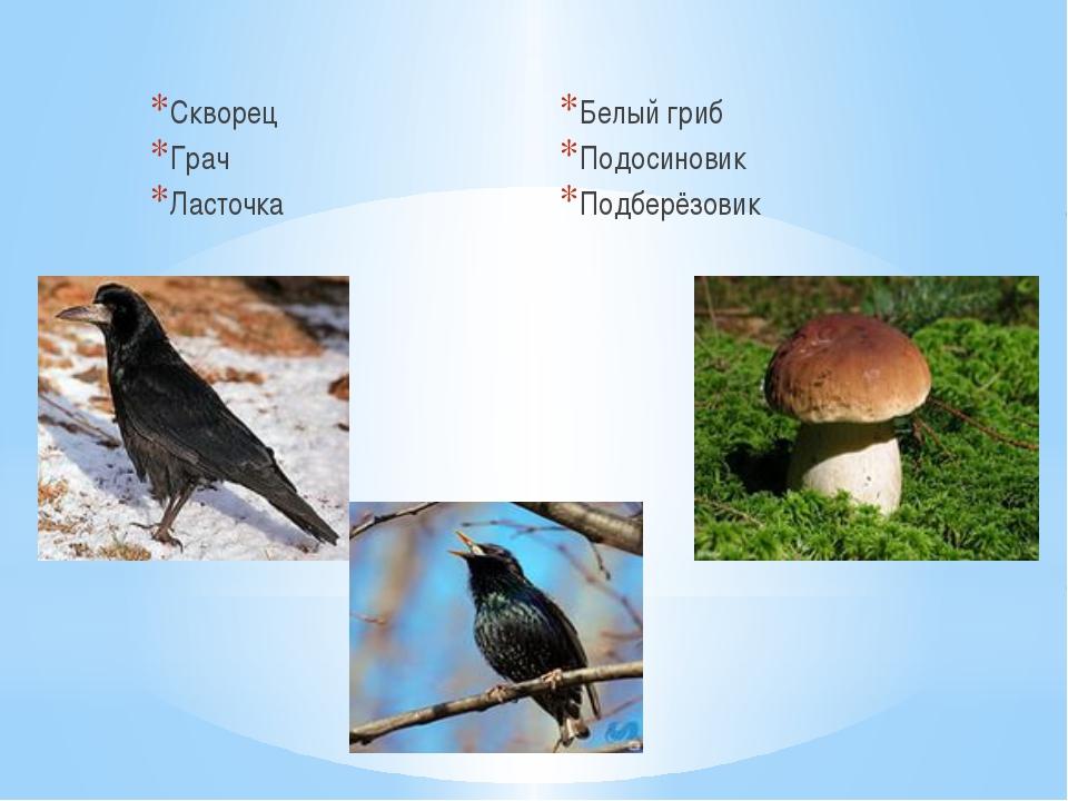 Скворец Грач Ласточка Белый гриб Подосиновик Подберёзовик