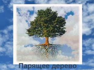 Парящее дерево