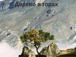 Дерево в горах