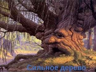 Сильное дерево