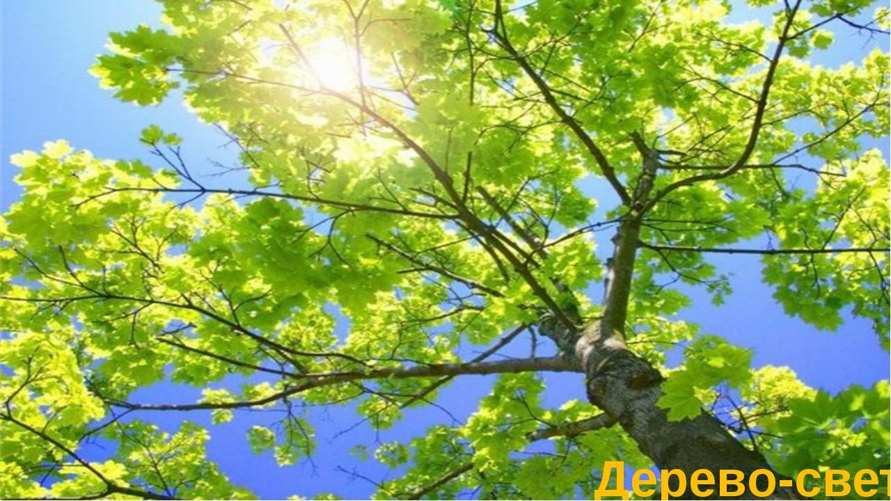 Дерево-свет