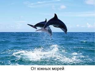 Отюжных морей