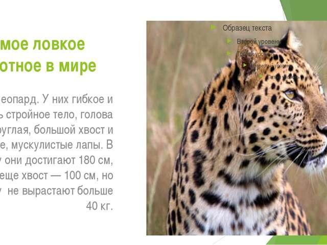 Самое ловкое животное в мире это леопард. У них гибкое и очень стройное тело,...