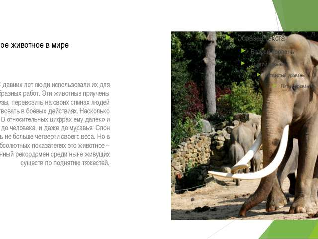 Самое сильное животное в мире С давних лет люди использовали их для разнообра...