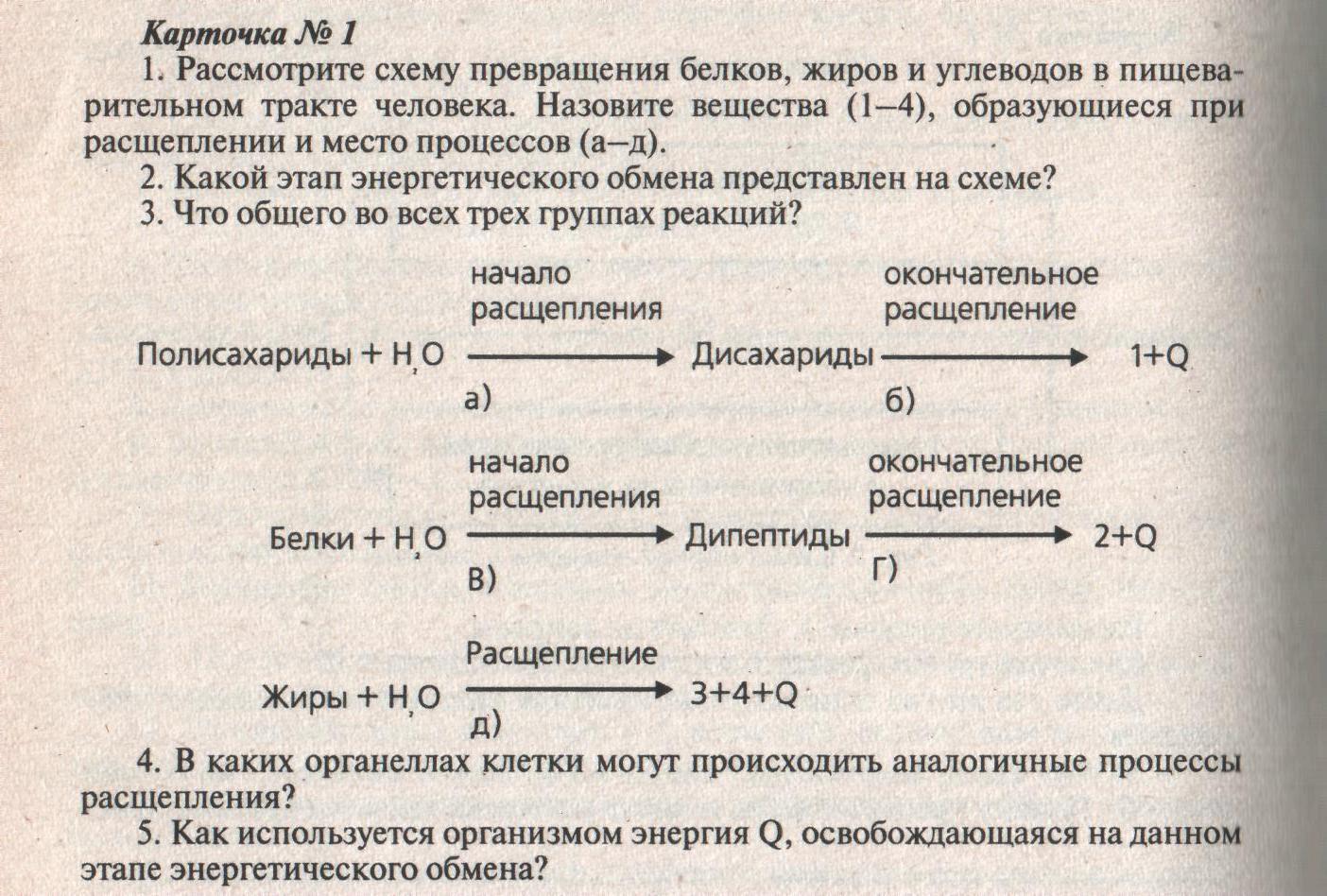 shpora-obmen-veshestv-i-energii-v-kletke-test-3