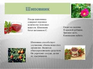 Шиповник Плоды шиповника содержат огромное количество полезных веществ. Шипов