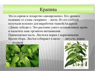 Крапива Это и сорняк и лекарство одновременно. Его древнее название от слова
