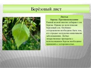 Берёзовый лист Листья березы.Противопоказания Ранней весной многие собирают