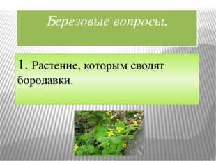 Березовые вопросы. 1. Растение, которым сводят бородавки.