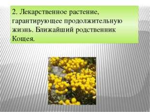 2. Лекарственное растение, гарантирующее продолжительную жизнь. Ближайший род