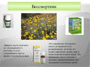 Бессмертник Эфирное масло получают из «неувядающего» растения, то есть сохран