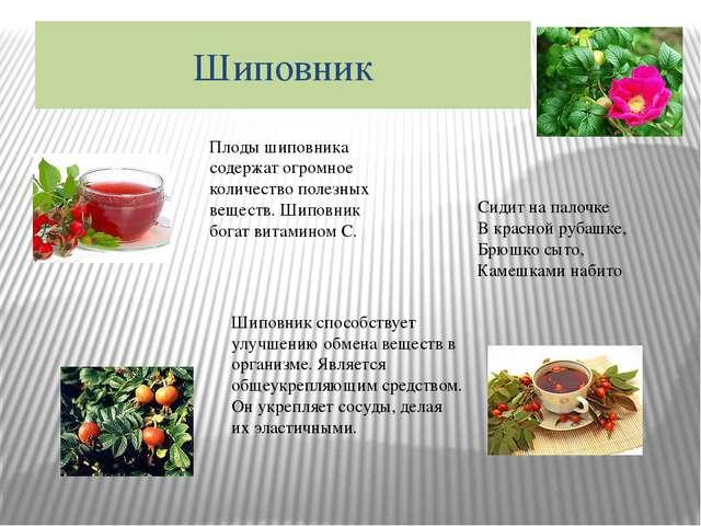 Шиповник Плоды шиповника содержат огромное количество полезных веществ. Шипов...