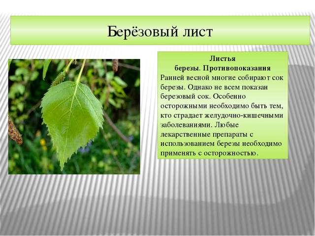 Берёзовый лист Листья березы.Противопоказания Ранней весной многие собирают...