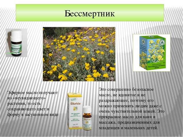 Бессмертник Эфирное масло получают из «неувядающего» растения, то есть сохран...