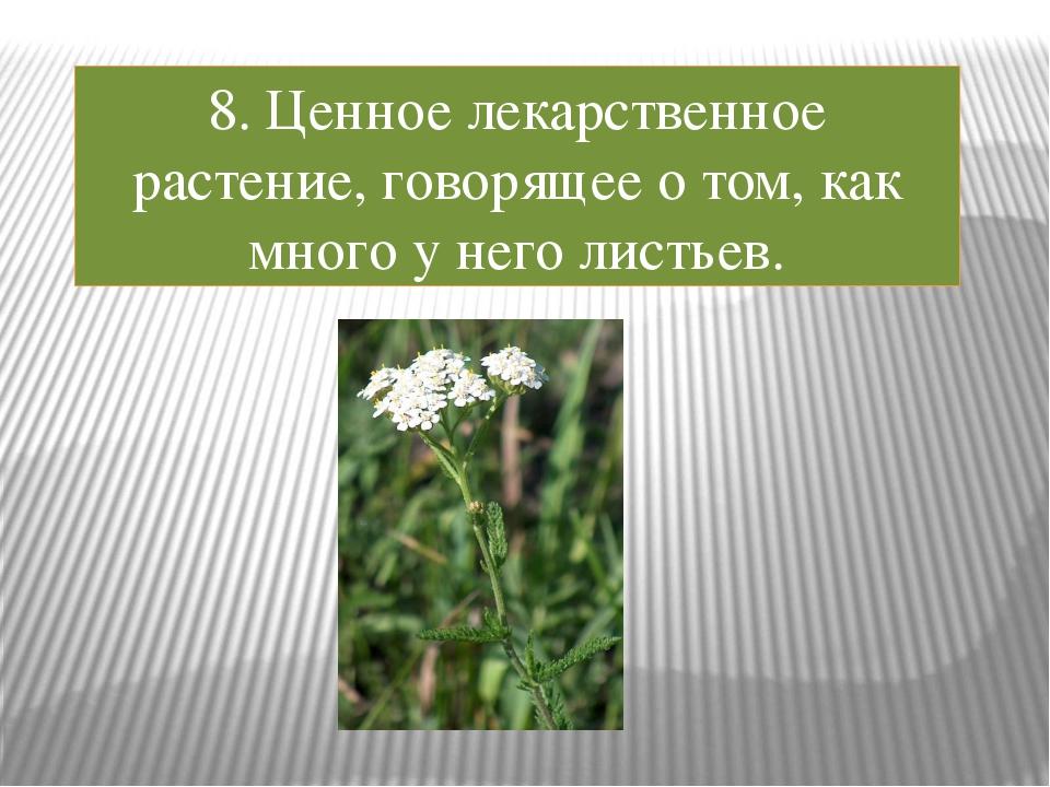 8. Ценное лекарственное растение, говорящее о том, как много у него листьев.