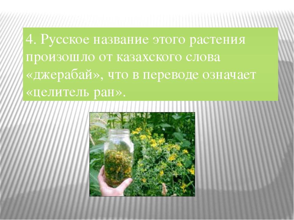 4. Русское название этого растения произошло от казахского слова «джерабай»,...