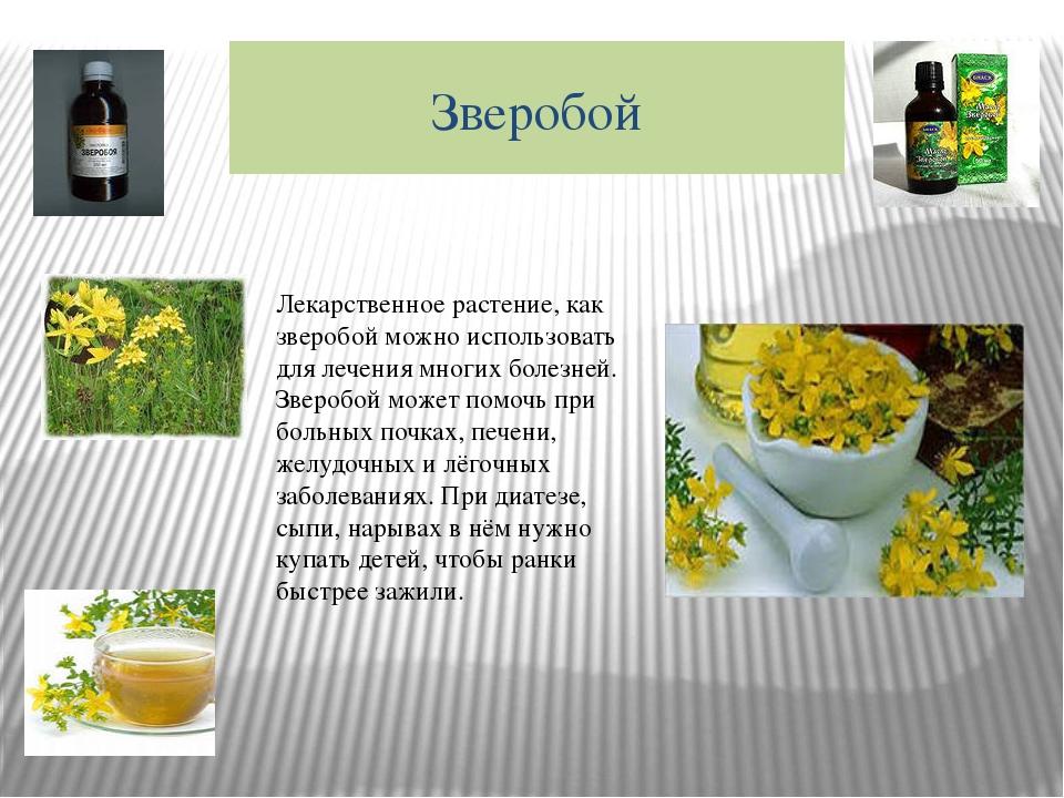 Зверобой Лекарственное растение, как зверобой можно использовать для лечения...