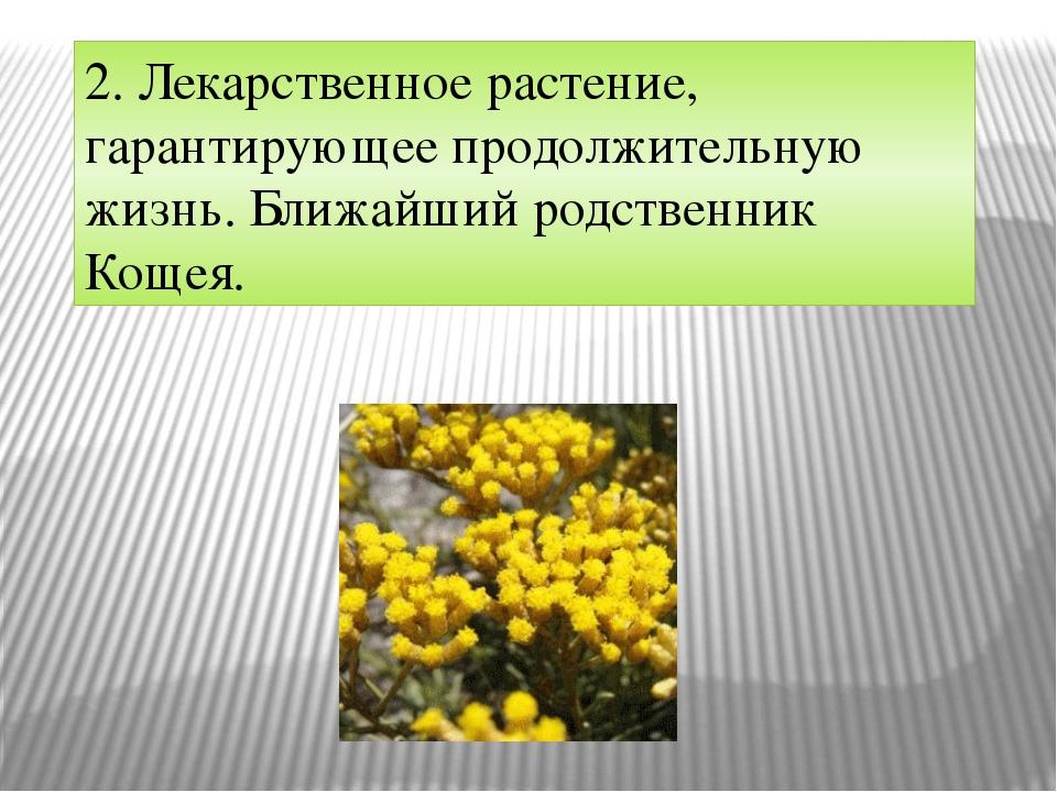 2. Лекарственное растение, гарантирующее продолжительную жизнь. Ближайший род...