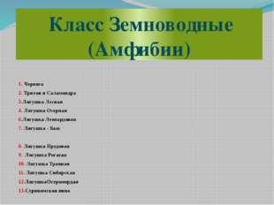 Класс Земноводные (Амфибии) 1. Червяга 2. Тритон и Саламандра 3.Лягушка Лесн