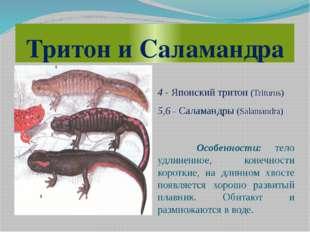 Тритон и Саламандра 4 - Японский тритон (Triturus) 5,6 – Саламандры (Salamand
