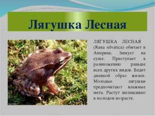 Лягушка Лесная ЛЯГУШКА ЛЕСНАЯ (Rana silvatica) обитает в Америке. Зимует на с
