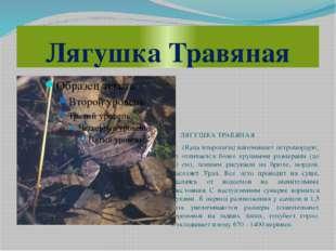 Лягушка Травяная ЛЯГУШКА ТРАВЯНАЯ (Rana temporaria) напоминает остромордую, н