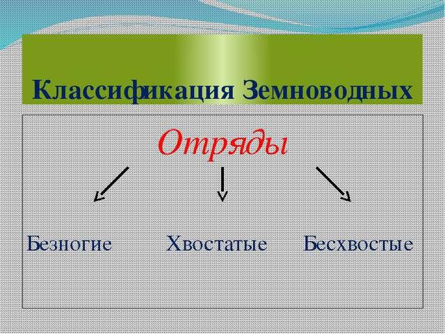 Классификация Земноводных Отряды Безногие Хвостатые Бесхвостые