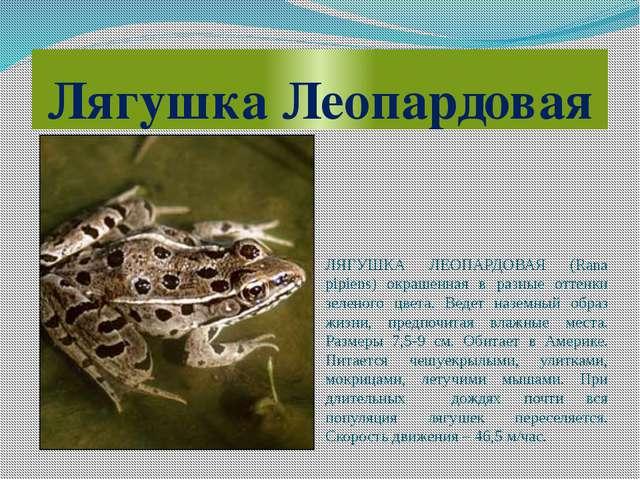 Лягушка Леопардовая ЛЯГУШКА ЛЕОПАРДОВАЯ (Rana pipiens) окрашенная в разные от...