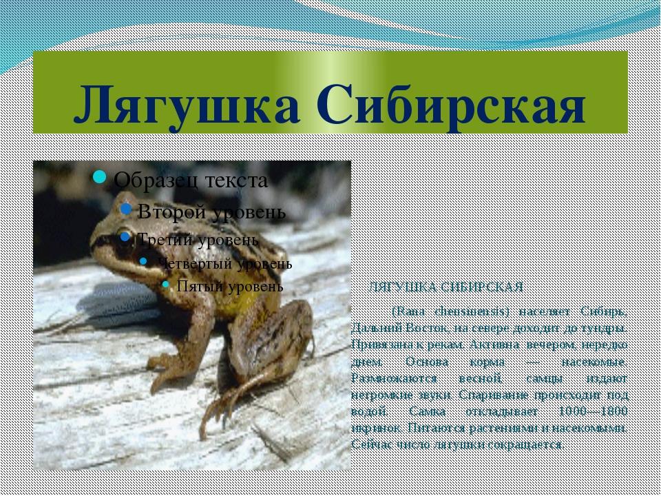 Лягушка Сибирская ЛЯГУШКА СИБИРСКАЯ (Rana chensinensis) населяет Сибирь, Даль...