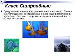 Класс Сцифоидные Представители класса встречаются во всех морях. Тело у них у