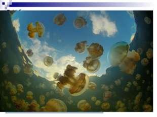 У большинства медуз при размножении наблюдается смена двух поколений — беспол