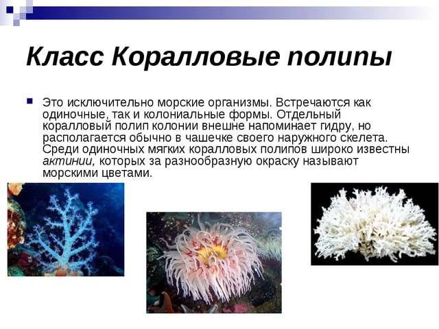 Класс Коралловые полипы Это исключительно морские организмы. Встречаются как...