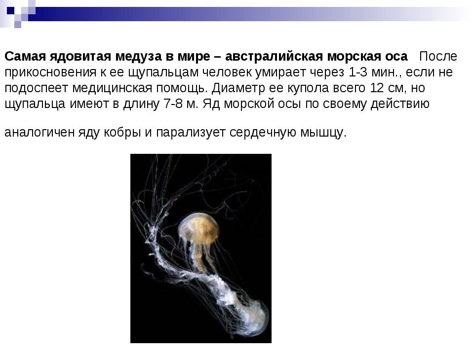 Самая ядовитая медуза в мире – австралийская морская оса  После прикосновени...