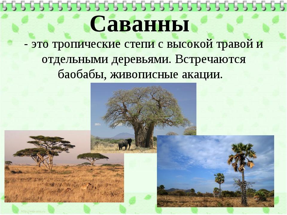 Саванны - это тропические степи с высокой травой и отдельными деревьями. Встр...