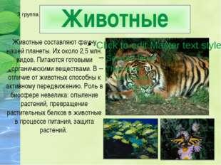 Преобладают: Среди животных - насекомые
