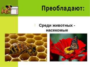 Среда обитания Всё, что окружает живой организм Тела живой природы Тела нежив