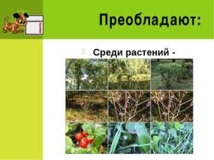 1 группа натуралистов- Наземно-воздушная среда 2 группа натуралистов- Водная