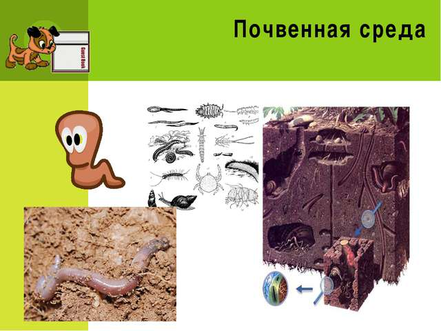Викторина Что такое биосфера? Что означает приставка «БИОС» в слове «биосфер...