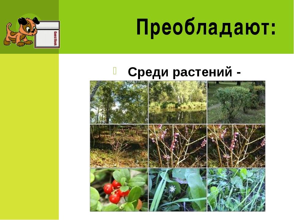 1 группа натуралистов- Наземно-воздушная среда 2 группа натуралистов- Водная...