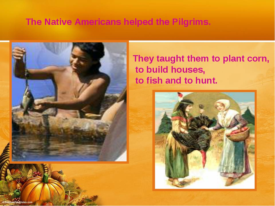 The Native Americans helped the Pilgrims. They taught them to plant corn, to...